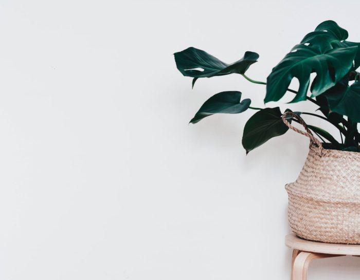 Le minimalisme et l'écologie : Deux concepts qui se rejoignent ?