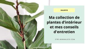 PLANT TOUR : Ma collection de plantes d'intérieur